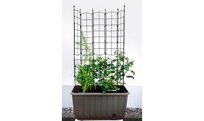 KHW Spalier mit Bewässerungskasten »Ambizioso«, BxTxH: 65x35x130 cm kaufen