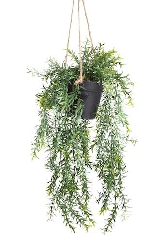 Botanic-Haus Künstliche Zimmerpflanze »Asparagus-Hängeampel« kaufen