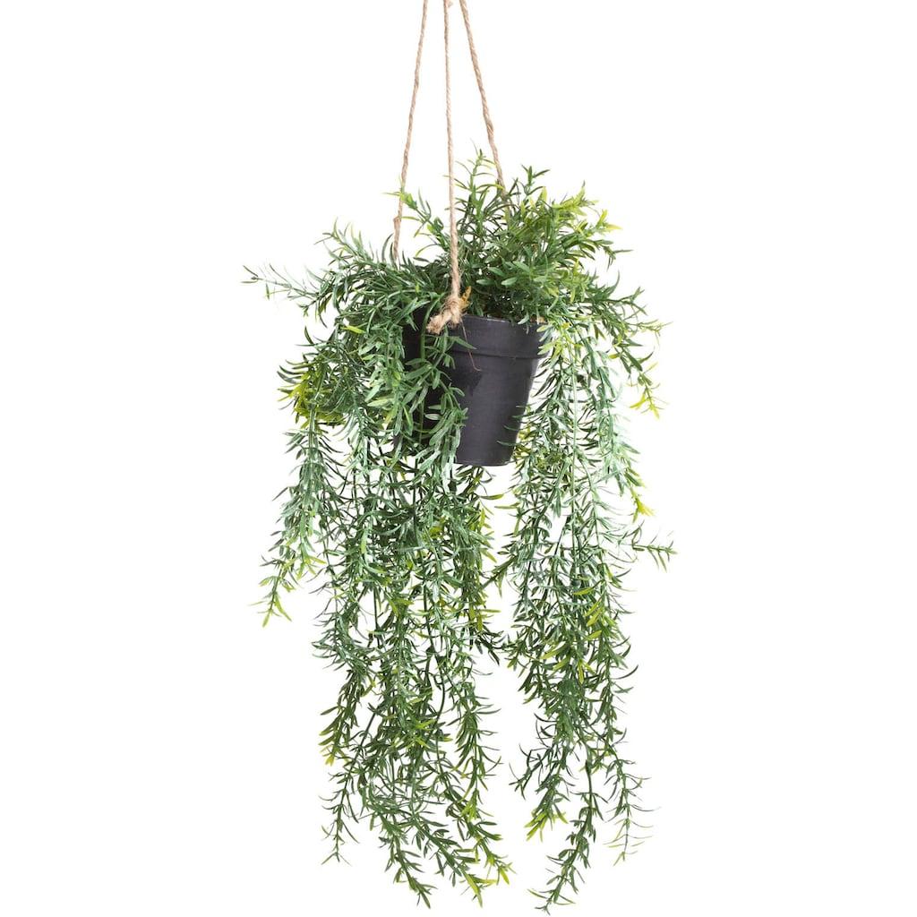 Botanic-Haus Künstliche Zimmerpflanze »Asparagus-Hängeampel«