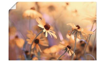 Artland Wandbild »Herbst leuchten aus dem Garten«, Blumenwiese, (1 St.), in vielen... kaufen