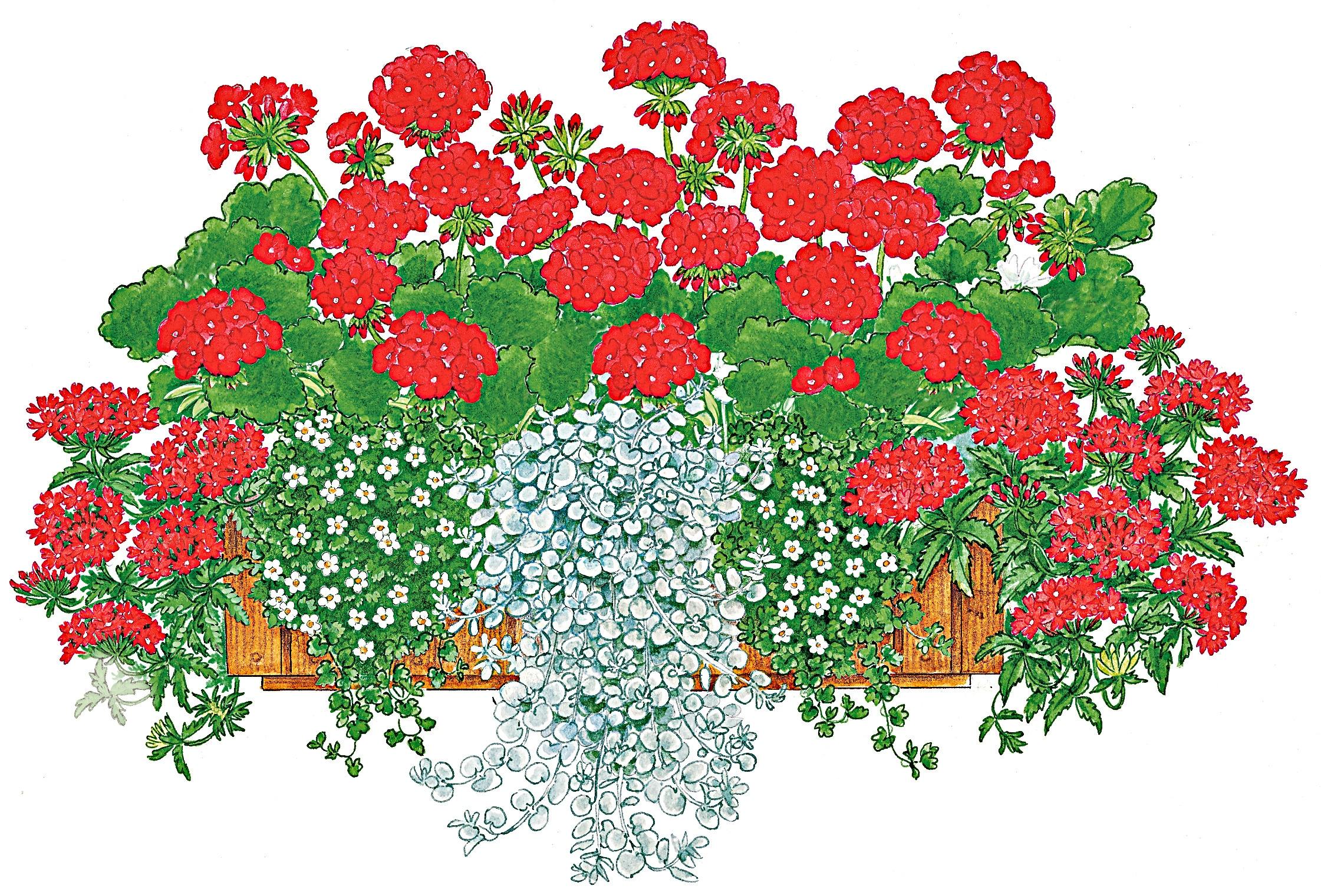 BCM Balkonpflanze Farbfeuer, 16 Pflanzen mit Erde bunt Balkonpflanzen Garten Balkon