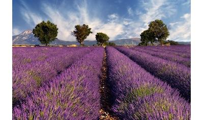 Papermoon Fototapete »Lavendelfeld«, Vliestapete, hochwertiger Digitaldruck kaufen