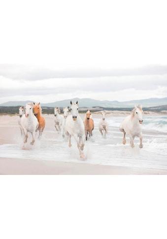 Komar Fototapete »White Horses«, bedruckt-Meer, ausgezeichnet lichtbeständig kaufen
