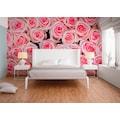 living walls Fototapete »rosa Rosen«, 400 x 250 cm