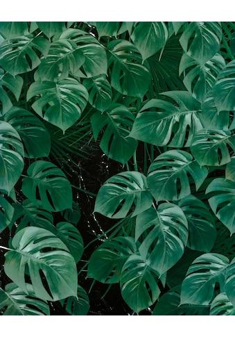 Komar Vliestapete »Pure Monstera on Marble«, naturalistisch kaufen