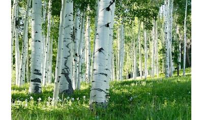 Papermoon Fototapete »Birkenwald«, Vliestapete, hochwertiger Digitaldruck kaufen