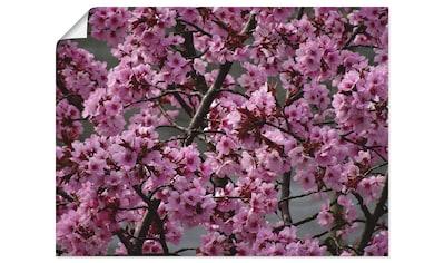 Artland Wandbild »Japanische Zierkirschen Blüte«, Bäume, (1 St.), in vielen Größen &... kaufen