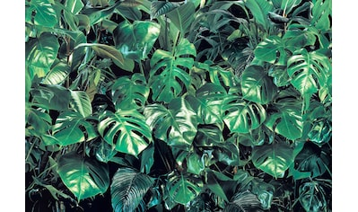 KOMAR Fototapete »Verdure«, 8 - teilig kaufen