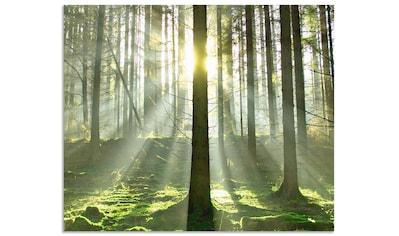 Artland Küchenrückwand »Wald im Gegenlicht« kaufen