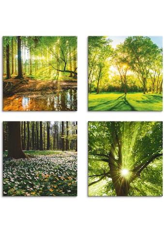 Artland Leinwandbild »Wald Bach Frühling Windrosen Sonne Baum« kaufen