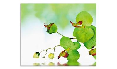 """Artland Küchenrückwand """"Schöne Orchidee mit grünem Hintergrund"""", (1 - tlg.) kaufen"""