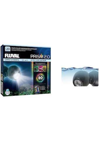 FLUVAL LED Aquariumleuchte »FL 6.5W RGB LED Spot Light«, 6,5 W RGB kaufen