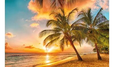 PAPERMOON Fototapete »Barbados Palm Beach«, Vlies, in verschiedenen Größen kaufen