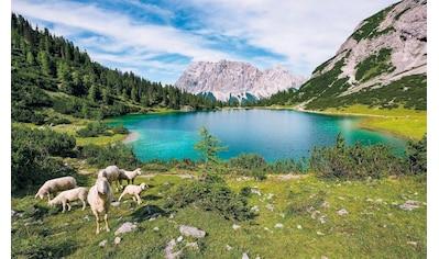 Komar Vliestapete »Paradise Lake«, naturalistisch kaufen