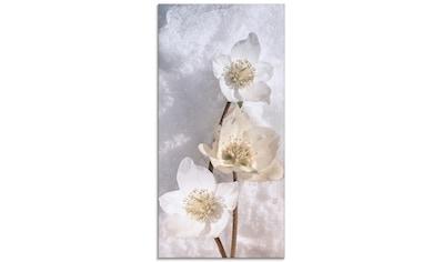 Artland Glasbild »Christrose im Schnee«, Blumen, (1 St.) kaufen