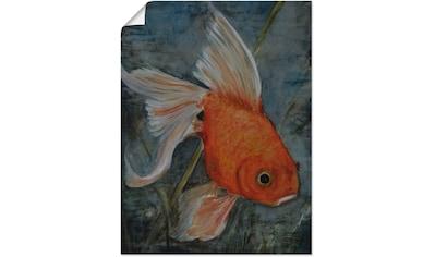 Artland Wandbild »Feng Shui  -  Goldfisch« kaufen