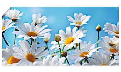 Artland Wandbild »Blumen  -  Margeriten« kaufen