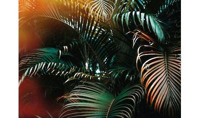 living walls Fototapete »Designwalls Jungle Colour« kaufen