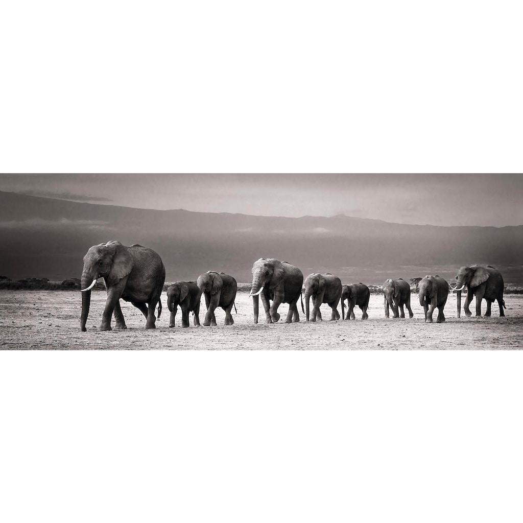 Wandbild »Elefantenparade«