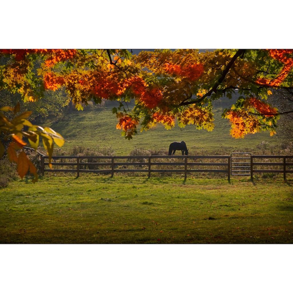 Papermoon Fototapete »Pferd auf der Weide«, Vliestapete, hochwertiger Digitaldruck