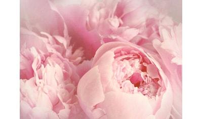 PAPERMOON Fototapete »Peony Flowers«, Vlies, in verschiedenen Größen kaufen