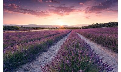 Komar Fototapete »Lavender Dream«, mehrfarbig-natürlich-bedruckt kaufen