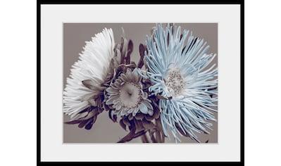 queence Bild »Verena«, Blumen, (1 St.) kaufen