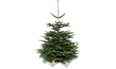 Weihnachtsbaumland Echter Weihnachtsbaum »Nordmanntanne auf Holzkreuz montiert«,... kaufen