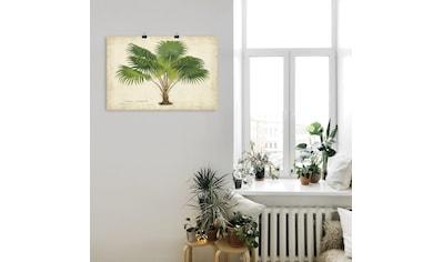 Artland Wandbild »Palme aus den Tropen V«, Bäume, (1 St.), in vielen Größen &... kaufen