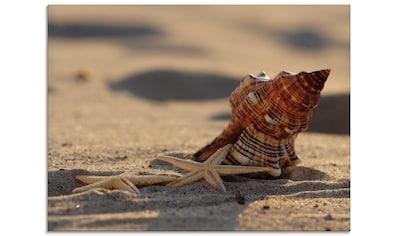 Artland Glasbild »Große Muschel und Seesterne am Meer«, Wassertiere, (1 St.) kaufen