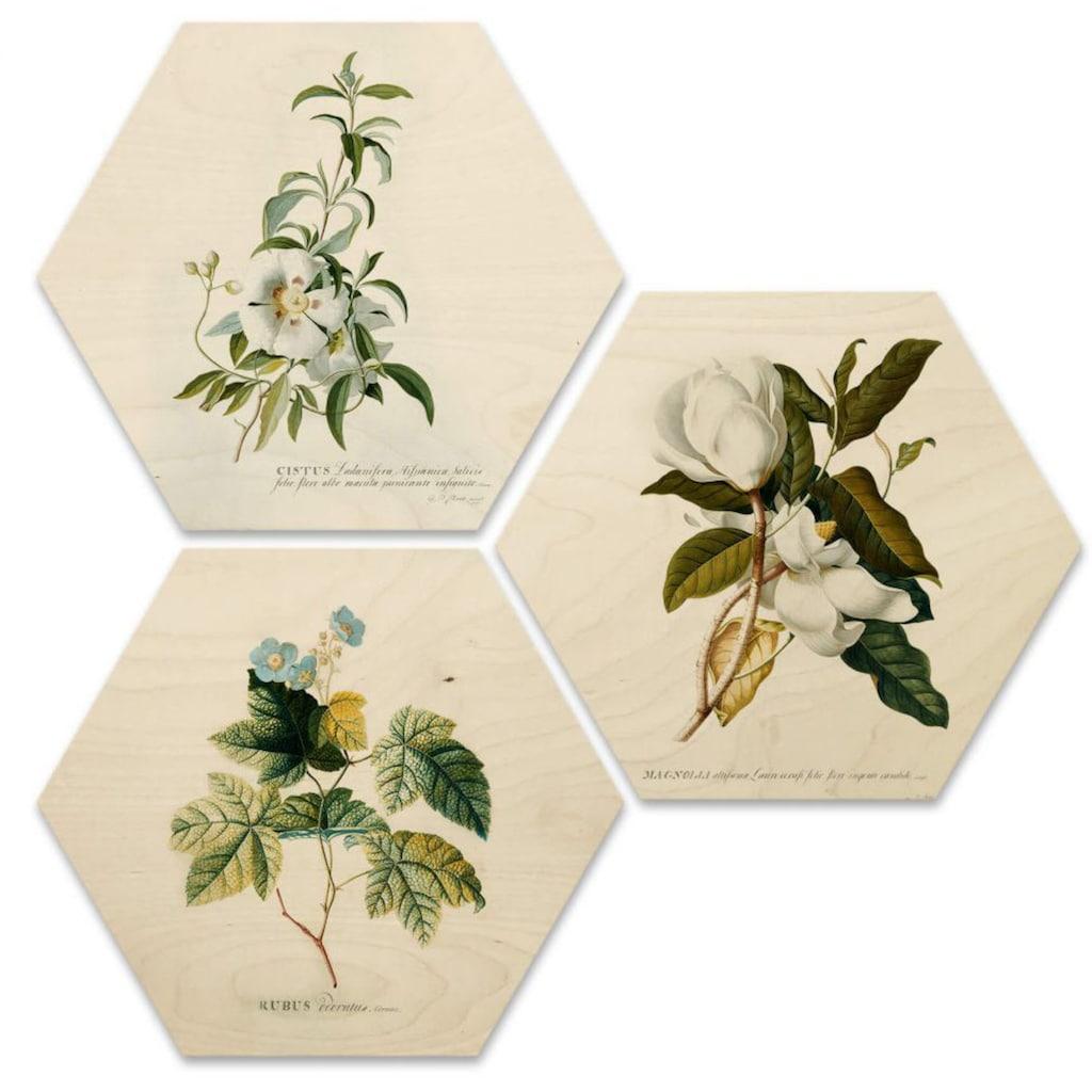 Wall-Art Mehrteilige Bilder »Botanische Collage Blumen Floral«, (Set, 3 St.)