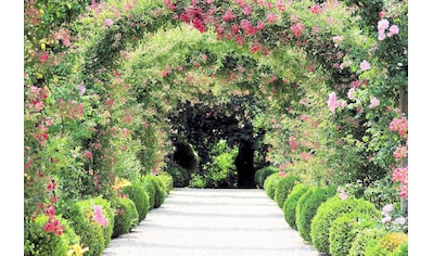 Home affaire Fototapete »Rose Arch Garden« kaufen