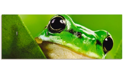Artland Schlüsselbrett »Ausspähender Frosch« kaufen