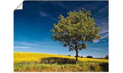 Artland Wandbild »Ein Baum am Rapsfeld«, Felder, (1 St.), in vielen Größen &... kaufen