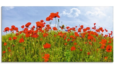 Artland Glasbild »Mohnblumen Panorama« kaufen