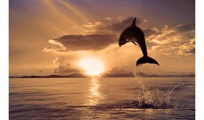 Papermoon Fototapete »Springender Delphin«, Vliestapete, hochwertiger Digitaldruck kaufen