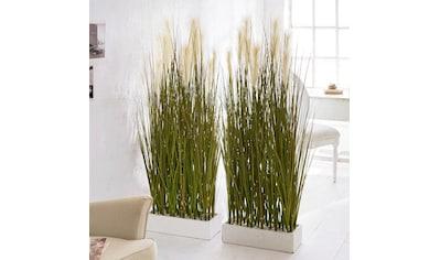 Schneider Kunstpflanze »Raumtrenner - Gras«« kaufen