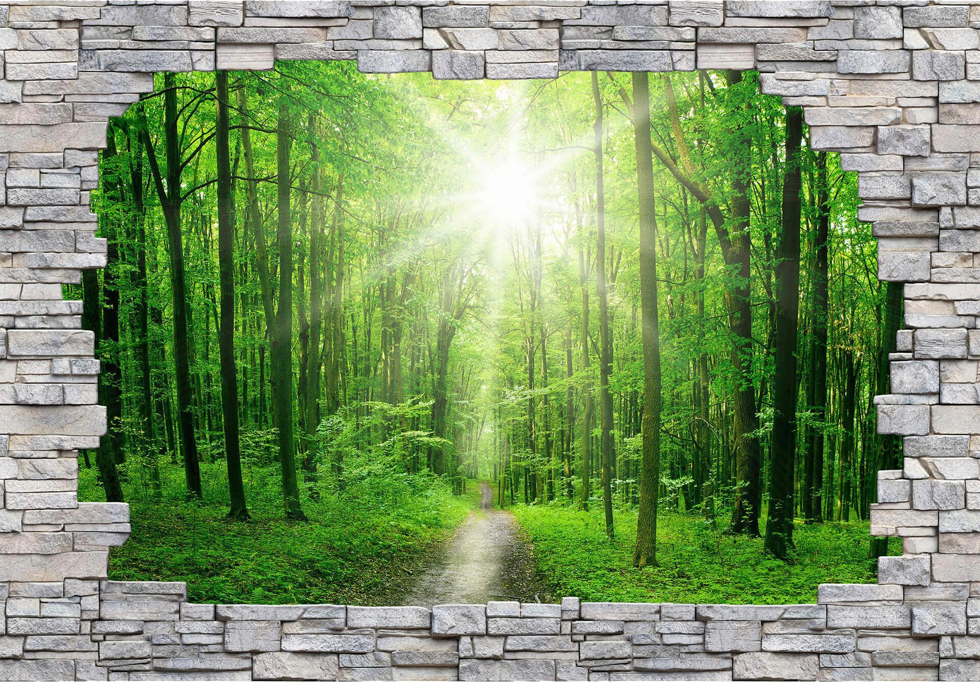 Fototapete 3D Sunny Forest Mauer grün Fototapeten Tapeten Bauen Renovieren