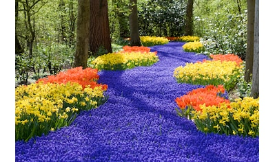 Papermoon Fototapete »Spring Flowers« kaufen