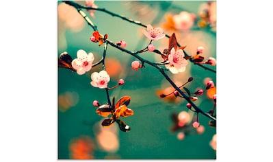 Artland Glasbild »Japanische Kirsch Sakura Blumen« kaufen