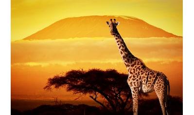 Papermoon Fototapete »Giraffe von Kilimanjaro«, Vliestapete, hochwertiger Digitaldruck kaufen