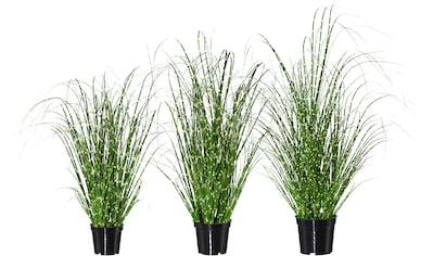 Creativ green Kunstgras »Miscanthus« (Set, 3 Stück) kaufen