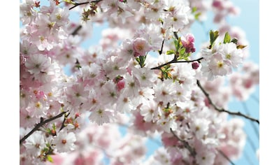 Komar Fototapete »Spring« kaufen
