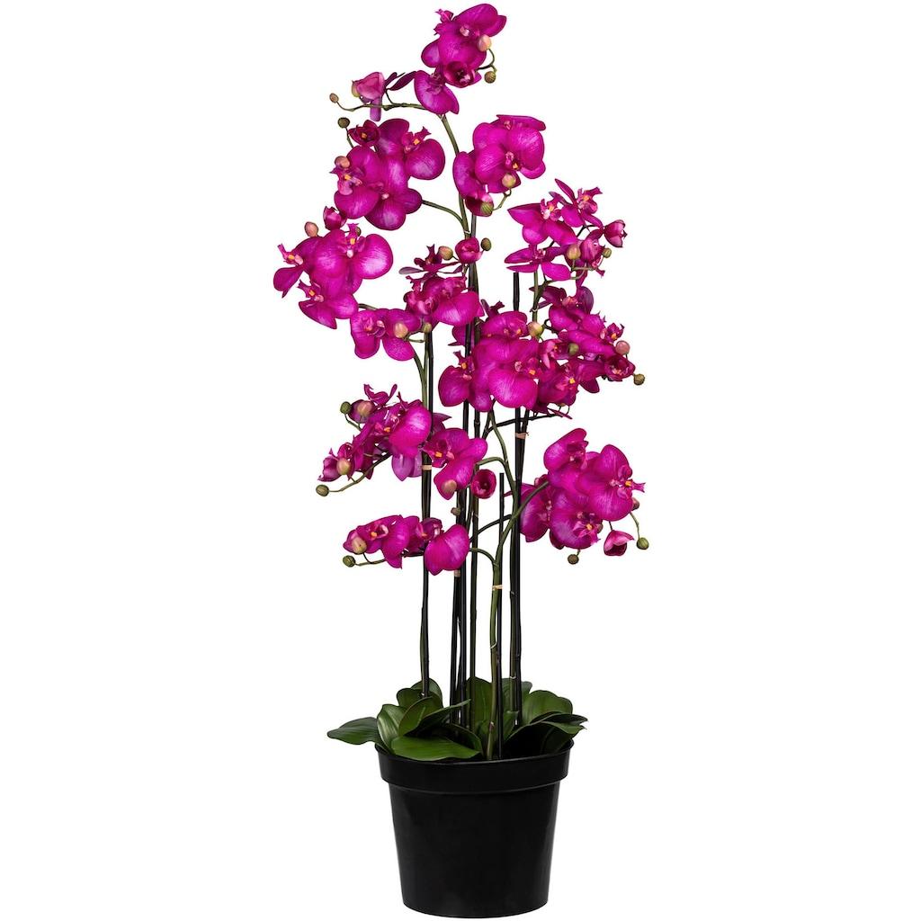Creativ green Kunstorchidee »Phalaenopsis«