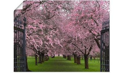 Artland Wandbild »Hanami«, Wiesen & Bäume, (1 St.), in vielen Größen & Produktarten... kaufen