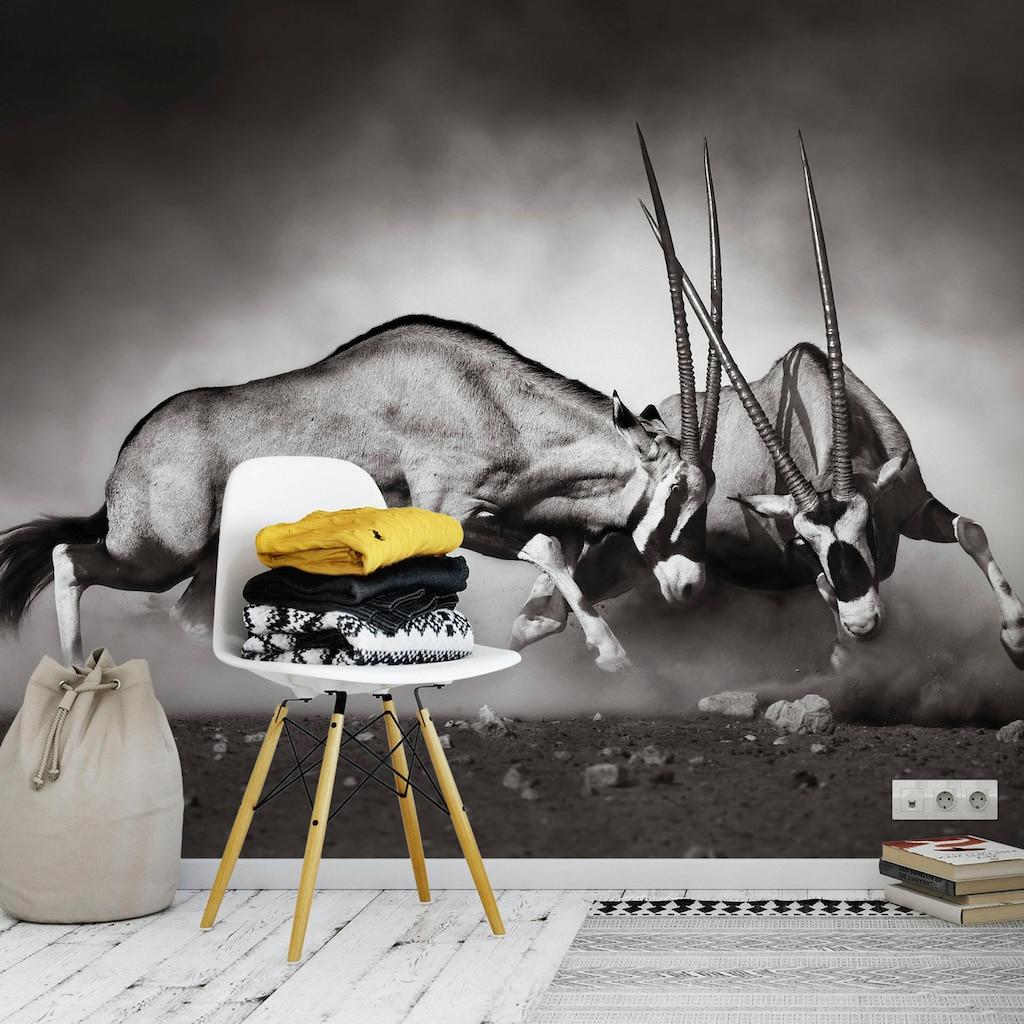 Wall-Art Vliestapete »Das Duell«
