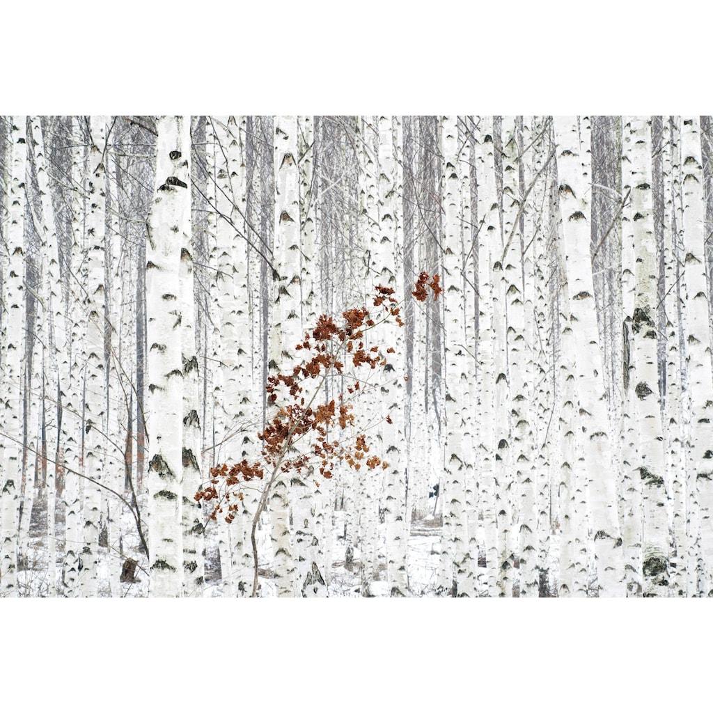 Wall-Art Vliestapete »Han - Birkenwald«