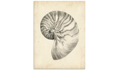 Artland Glasbild »Antike Muschel Lehre I« kaufen