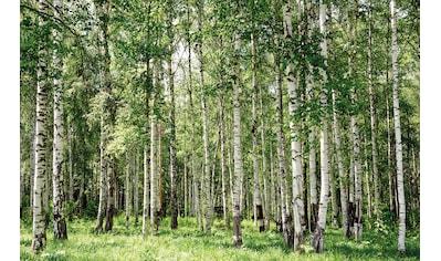 PAPERMOON Fototapete »Birch Forest«, Vlies, in verschiedenen Größen kaufen