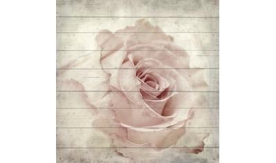queence Holzbild »Zarte Rose«, 40x40 cm kaufen